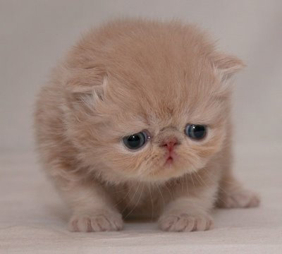 [Image: cute-sad-kitten06.jpg]